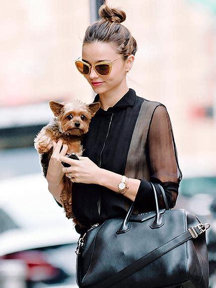 how often should i walk my yorkie yorkies animaltalk