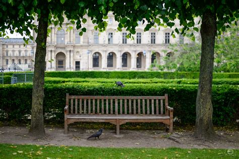 wooden park bench wooden park bench and ravens background