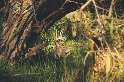 deer bed the urban deer complex 2 0 the urban deer complex
