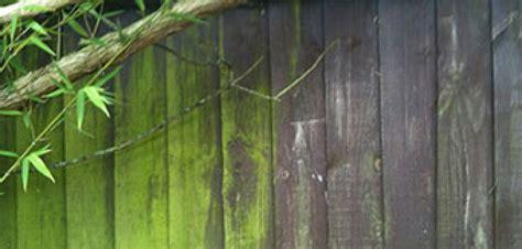 remove moss   wood deck  diy   advice