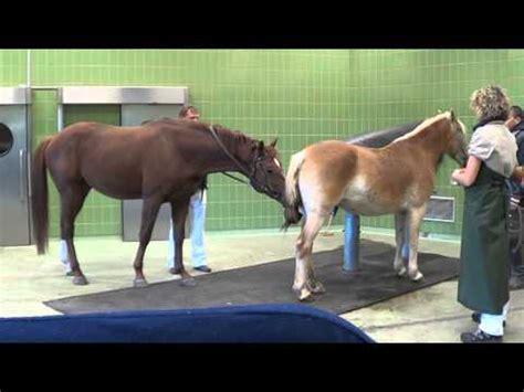 esel decken pferd decken noriker stute vidoemo emotional unity