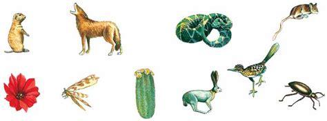 cadena alimenticia serpiente cadena alimenticia y explicar imagui
