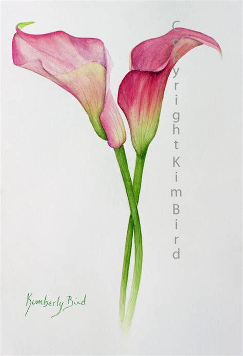 watercolor tattoo lily calla watercolor so much so