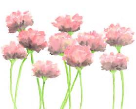 water color flowers nature watercolor flowers painting pink poppies by