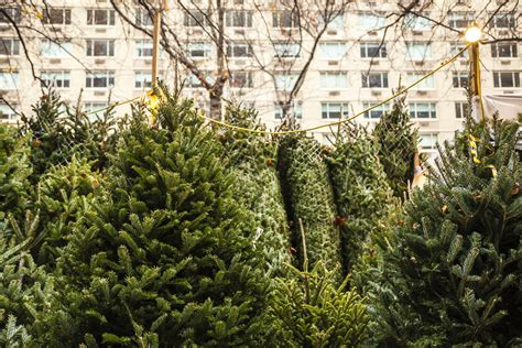 where to buy a real christmas tree in nyc