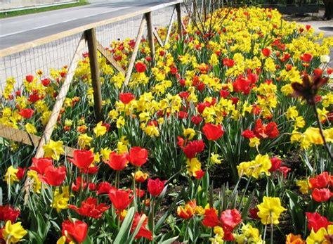 fumagalli fiori realizzazione e manutezione aiuole e bordure fumagalli