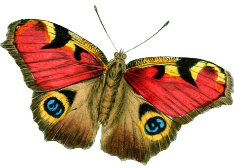 Best Image | download png image butterfly png image clipart best