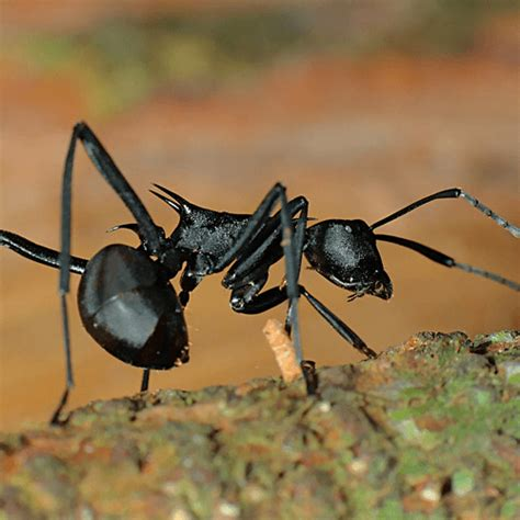 how to get rid of house ants how to get rid of black ants how to get rid of stuff