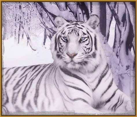 imagenes el blanco dibujo de tigre blanco grande imagenes de tigres