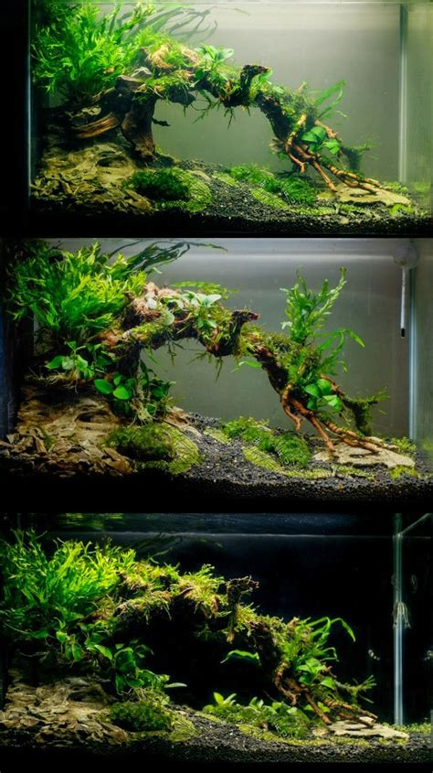 how to aquascape an aquarium 25 best aquascaping ideas on pinterest