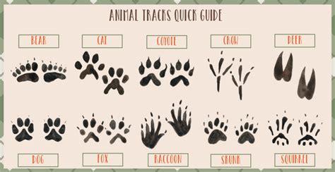 printable animal track cards free printable animal tracks explorer id cards