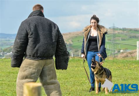 security dogs personal protection a1k9 family protection trainers