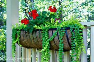 hometalk 17 hanging flower basket tips tricks and