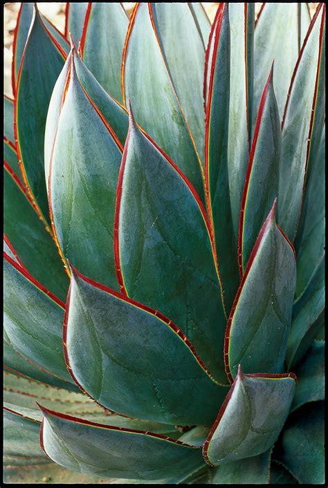 Backyard Sweepstakes Design With Cactus Sunset