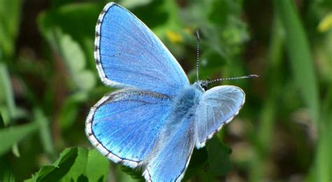 metamorphosis a prophetic word about radical change in 2018 books prophetic word the lord says you are not alone in your