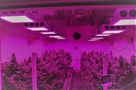 top   led grow lights reviews  indoor plants