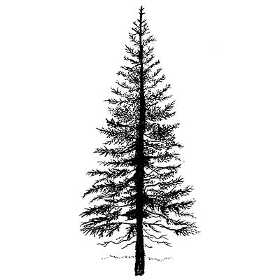 fir tree tattoo fir tree 1 lavinia sts ltd