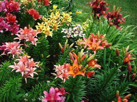 iowa regional lily society