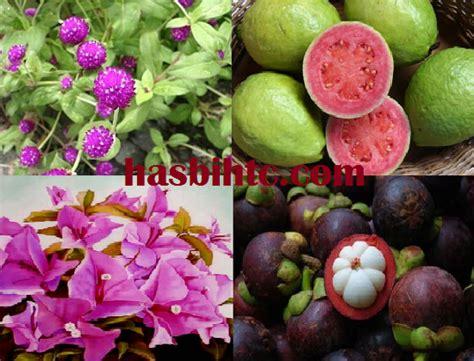 tumbuhan herbal  khasiatnya berbagai kumpulan makalah