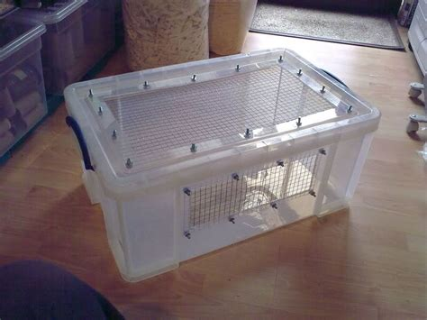 diy bin hamster cage need advice on bin cages hamster central hamsters advice hedgehogs and