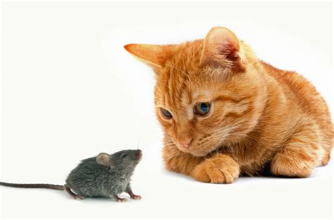 mousy cats and sheepish coyotes the science of animal personalities books cats could instinct genetically removed says