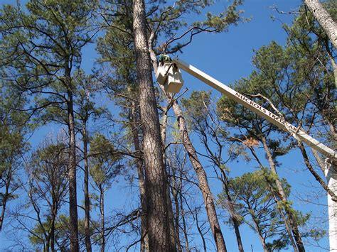 Norfolk Botanical Garden Eagles Bald Eagles At Norfolk Botanical Garden Nuckols Tree Care