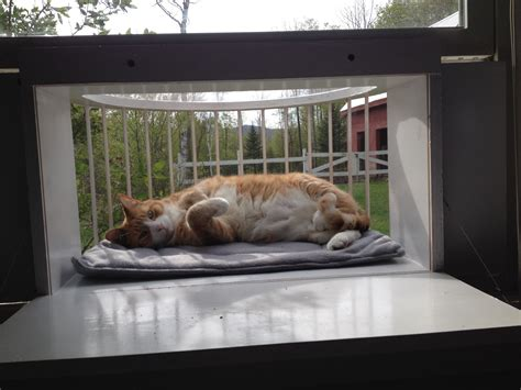 cat window box enclosure cat solarium