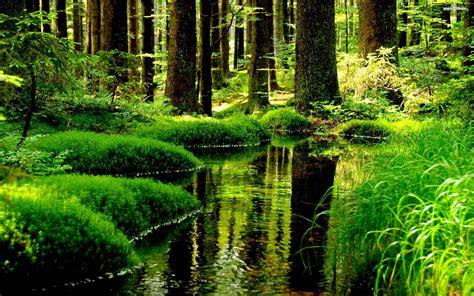 beautiful com beautiful pond hd wallpaper 1636740