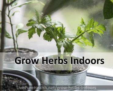 grow herbs indoors diy vertical garden infographic want a herb garden but