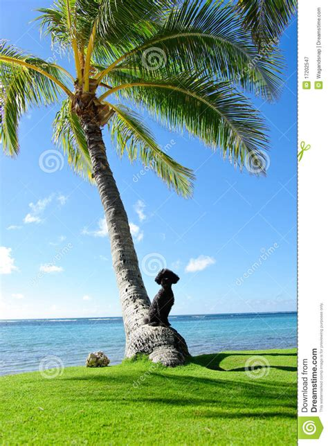 palm puppies palm tree royalty free stock photography image 17202547