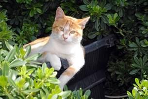 chasser les chats du jardin jardinier paresseux