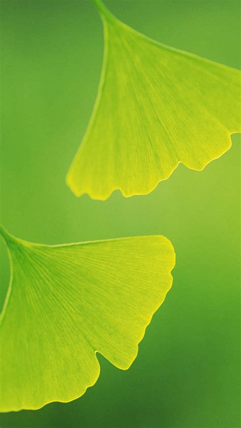 Two leaves Galaxy S5 Wallpapers, Samsung Galaxy S5