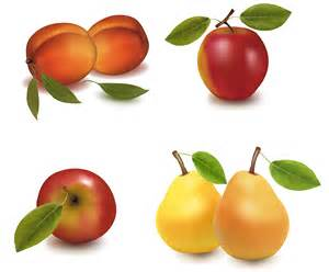 realistic vector fruits free vector 4vector