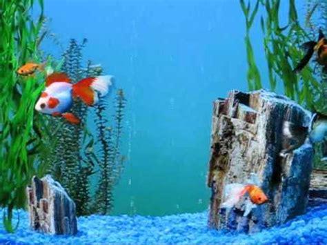 goldfish themes for windows 7 my windows xp fish aquarium screensaver vid 2 youtube
