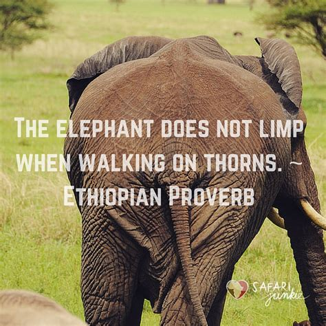 African Proverbs   Safari Junkie