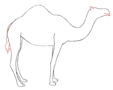 Drawing A by How To Draw Camal
