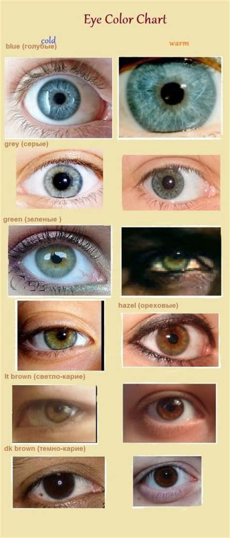 eye pattern color season eye color and pattern of iris eyes and iridology