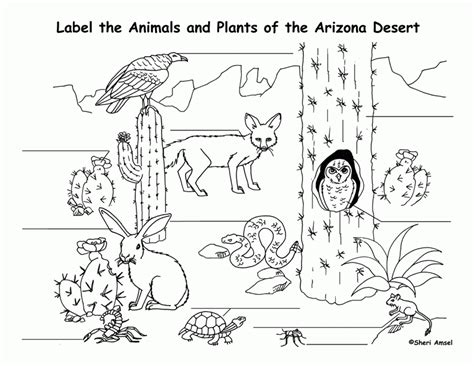 desert coloring pages desert animals coloring pages coloring home