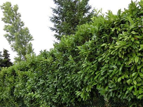 Amenagement Jardin Avec Vis A Vis by Conseil Am 233 Nagement Jardin Avec Vis 224 Vis Au Jardin
