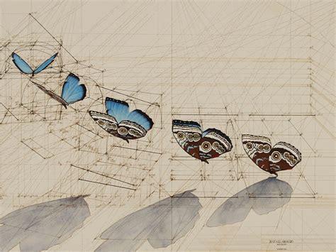 imagenes de mariposas en vuelo rafael araujo fibonacci y el vuelo de una mariposa
