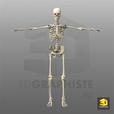 3d le cr 233 ation du squelette humain en 3d