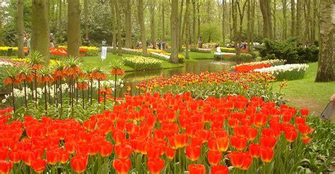 parco co dei fiori keukenhof o il variopinto mondo dei tulipani d olanda