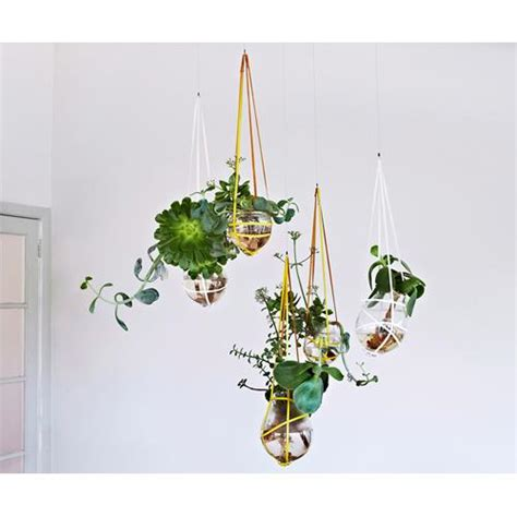 best indoor hanging plants the best indoor hanging plants for australian homes homes