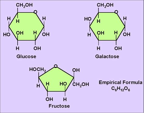 carbohydrates two important functions basic physiology fluids membrane transport nerve