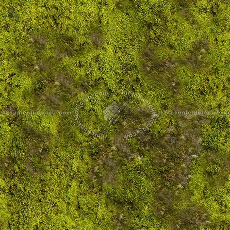 Building A House Blog by Moss Texture Seamless 13152