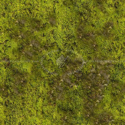 moss textures seamless
