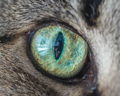 Softlens Cats Eye Soflens Cats Eye cat eye macro photos will hypnotize you