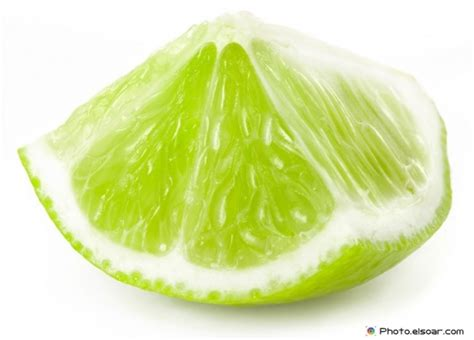 Fresh Lime Colelection fresh lime and slices wonderful collection elsoar