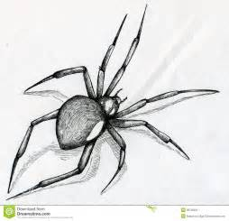 black widow spider drawing stock image image 38726231