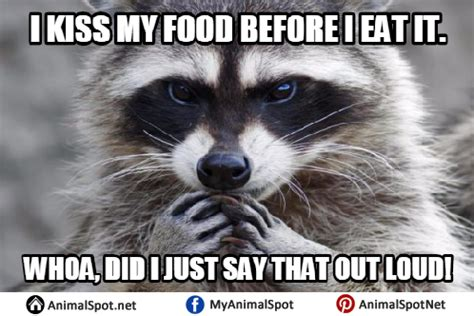 Excellent Raccoon Meme - raccoon excellent meme 28 images excellent evil